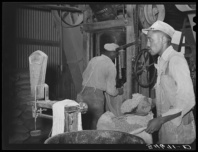 Negro weighing up feed made of peanut shells and blackstrap molasses. Comanche, Texas