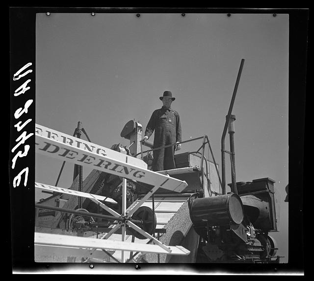 Operating a harvester on a Texas wheat field