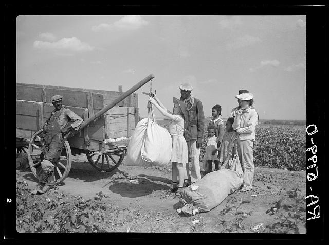 Plantation owner's daughter checks weight of cotton. Kaufman County, Texas