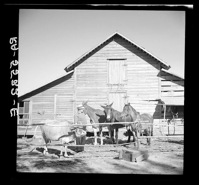 A successful rehabilitation client and some of the farm animals purchased with Resettlement Administration aid. Kinston, North Carolina