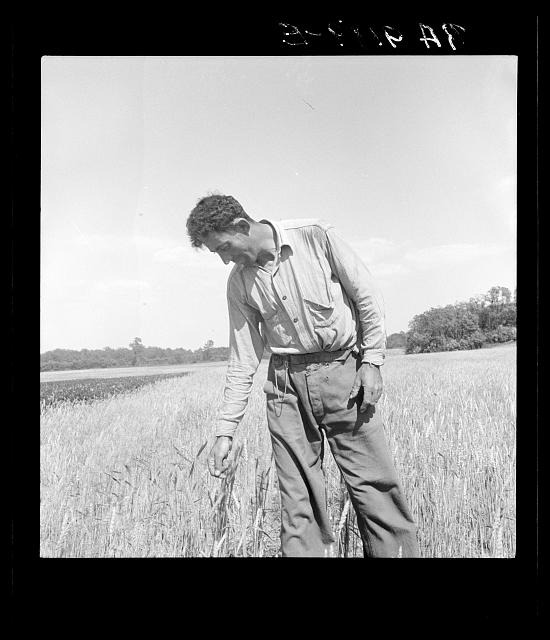Hightstown, New Jersey. Member of the farming group on the project. Polish-Jewish born, served in the American Army, World War