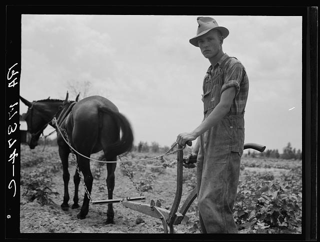 Son of sharecropper family at work in the cotton near Chesnee, South Carolina