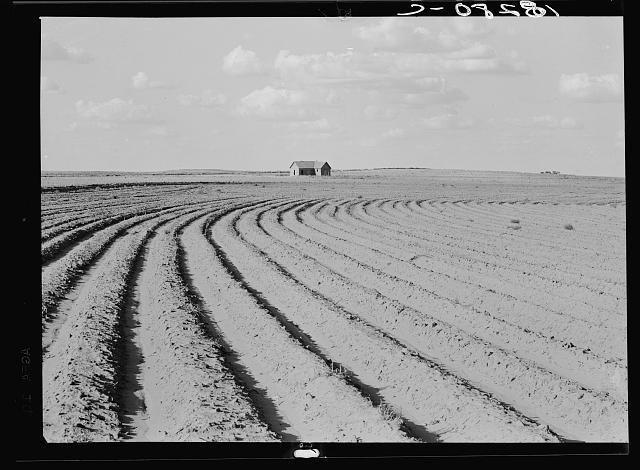 Power farming displaces tenants from the land in the western dry cotton areas. Texas Panhandle