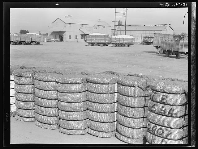 Kaweah Delta Cooperative cotton gin and yard. Tulare County, California. There are three such cooperatives in the southern cotton industry