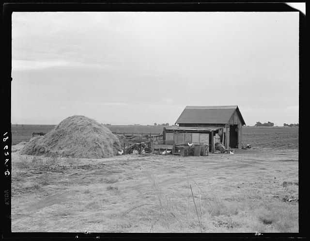 Small farm. Kern County, California