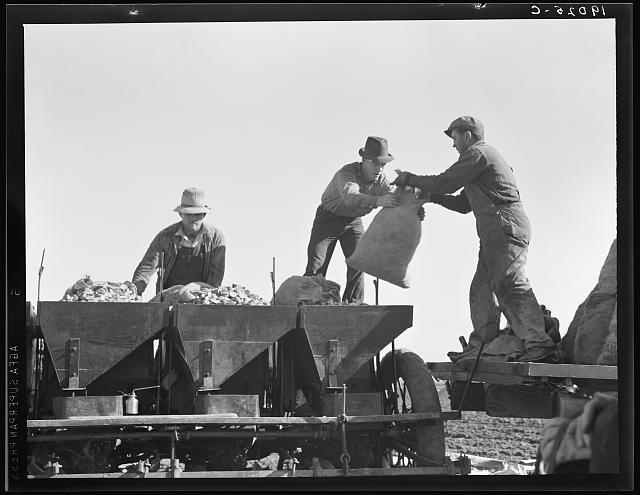 Loading bins of potato planter which fertilizes and plants potatoes in one operation. Kern County, California