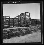 Fresno County on U.S. 99. See general caption. The end of the Chisholm Trail. Loading point for cattle shipment, showing cattle chute and part of corral