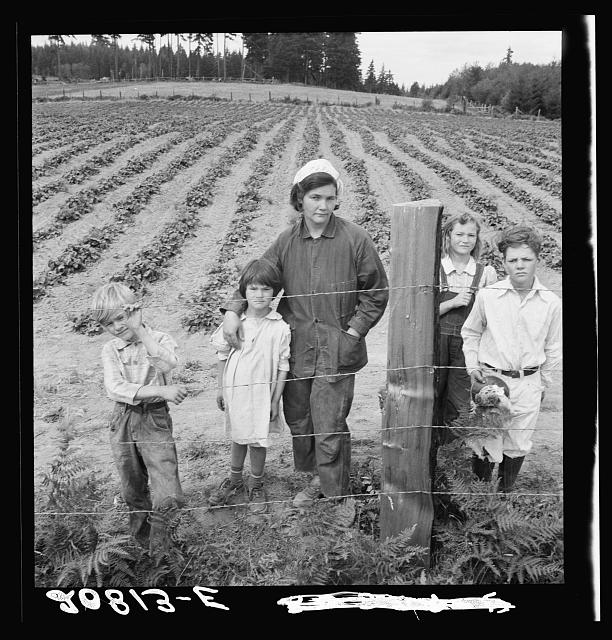 The Arnold children and mother on their newly fenced and newly cleared land. Note strawberry plants. Western Washington, Thurston County, Michigan Hill. See general caption number 36