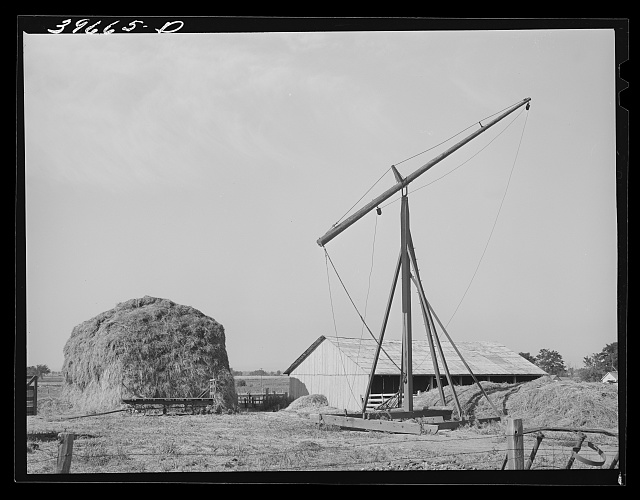 Hay on farm of member of the Dairymen's Cooperative Creamery. Caldwell, Canyon County, Idaho