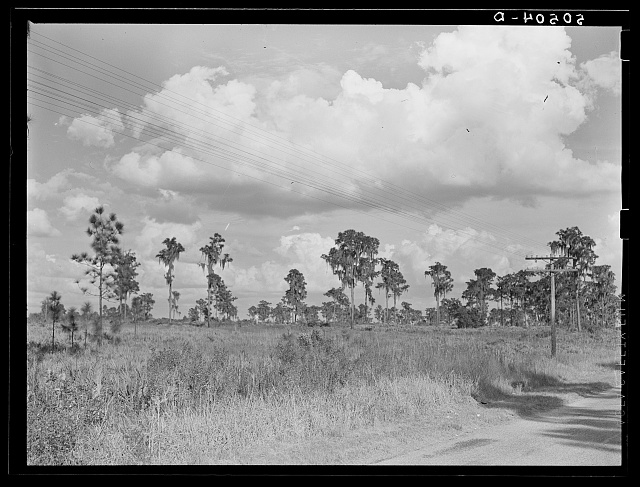 Typical Florida county near Winter Haven