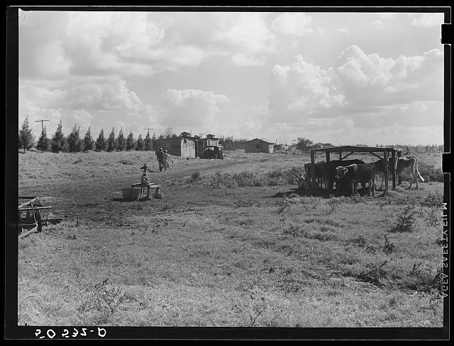 Shacks occupied by Negro migrant agricultural laborers between Clewiston and Belle Glade, Florida