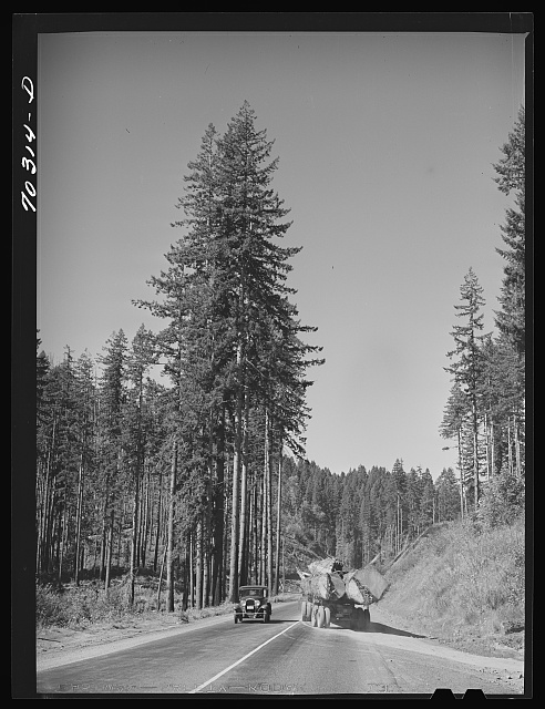 Giant logs being transported to mill by truck-trailer. Clatsop County, Oregon