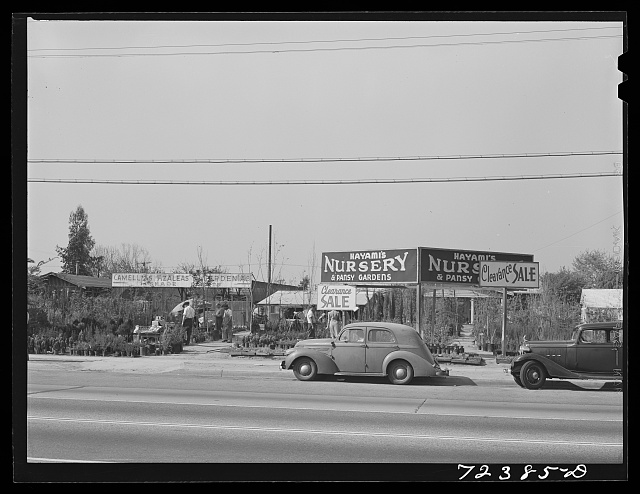 Los Angeles County, California. Japanese nurserymen selling out their stocks before they are evacuated from West coast areas under United States Army war emergency orders