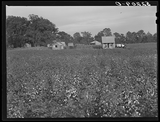 Part of large plantation, Mississippi Delta. Mississippi