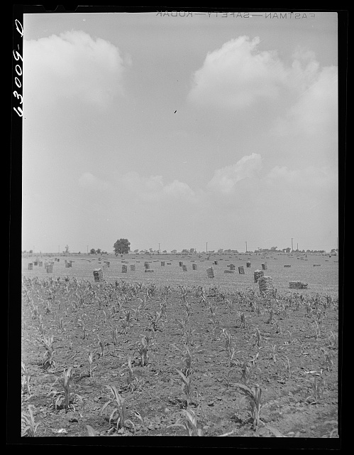 Corn field and baled hay near Danville, Illinois