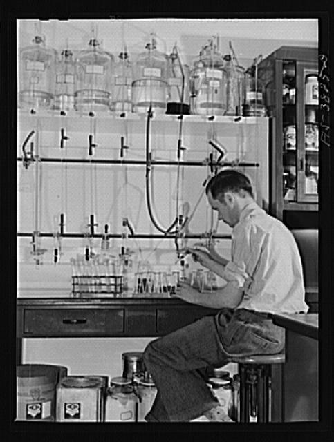 Dr. J.C. Lewis, assistant chemist, conducts microbiological titration of vitamins in dehydrated vegetables. Regional agricultural research laboratory, Albany, California