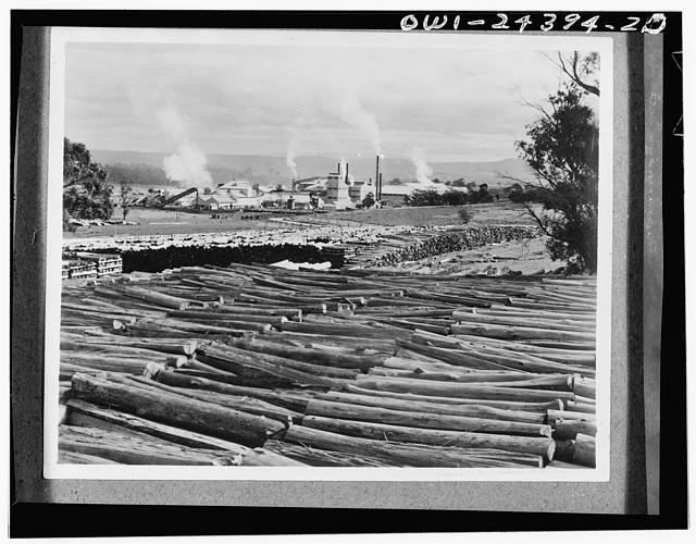 Victoria, Australia. A paper pulp mill. Soft wood pulp from the United States and domestic hardwood pulp are blended for paper board manufacture. The largest logs are shown ready for conversion to pulp