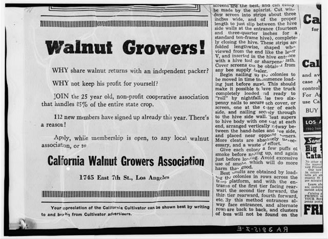 Walnut Growers Association advertisement, California