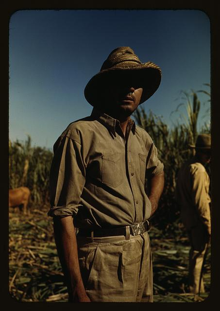 Man in a sugar cane field during harvest, Puerto Rico