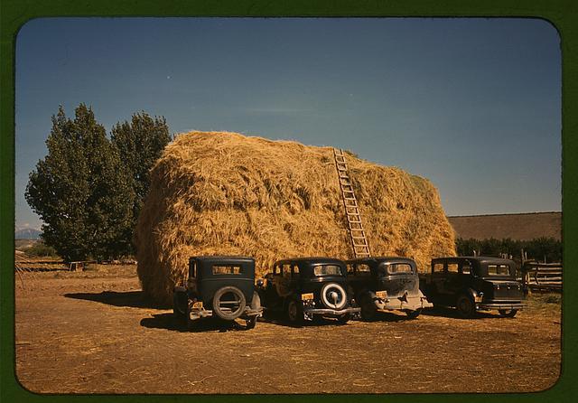 Hay stack and automobile of peach pickers, Delta County, Colorado