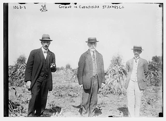 Gaynor with others in cornfield, St. James, L.I.