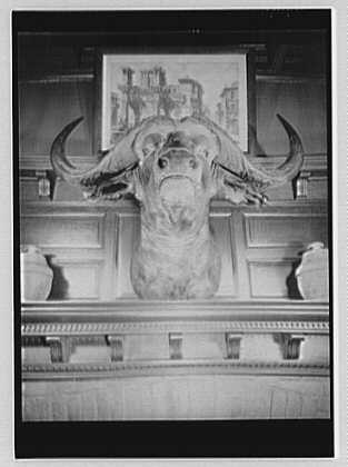 Sagamore Hill, residence of Theodore Roosevelt. Head of buffalo, shot on African safari, by Theo. Roosevelt
