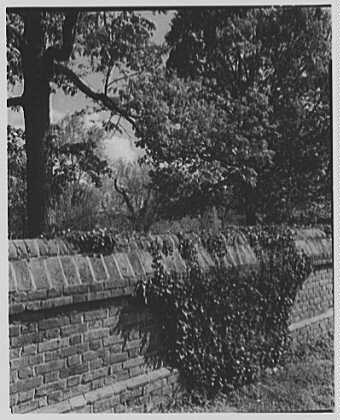 Williamsburg, Virginia. Ivy on capitol fence wall
