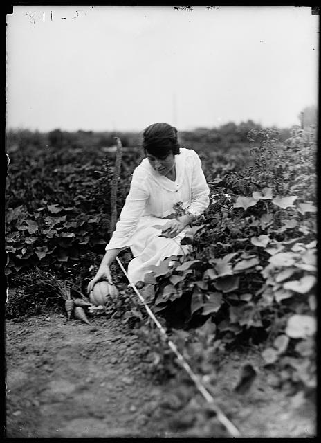 [Farm. Harvesting vegetables]