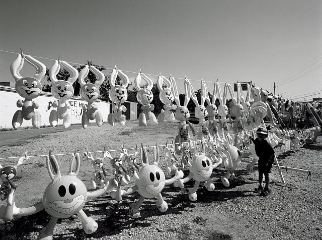 Youngster enjoys a display of inflated Easter bunnies for sale on a street corner in San Antonio, Texas