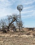 Windmill and a bare tree in rural Runnels County, Texas, south of Abilene