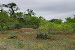 Rural scene combining cacti, trees, and bushes in Karnes County, Texas