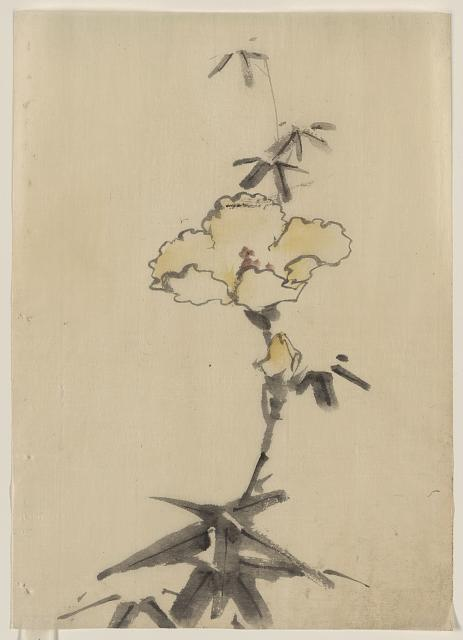[Yellow blossom with bud on a stalk above leaves]