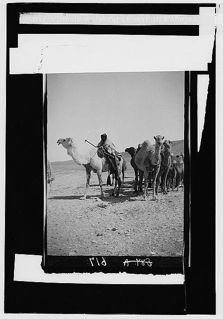 Costumes, characters, etc. Camels crossing the desert to Palmyra