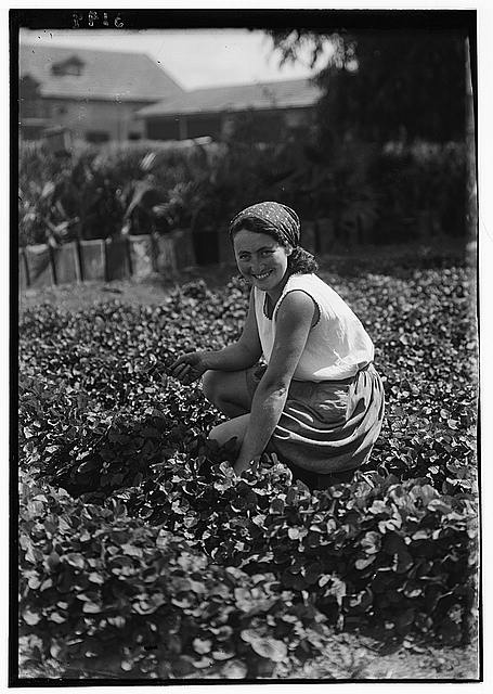 Nahalal. Girls' agricultural training school. Picking violets. A better class city girl immigrant turning to agriculture