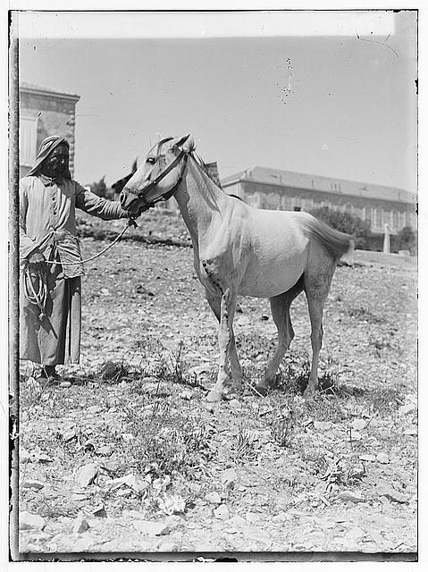 [Man with horse in field near buildings]