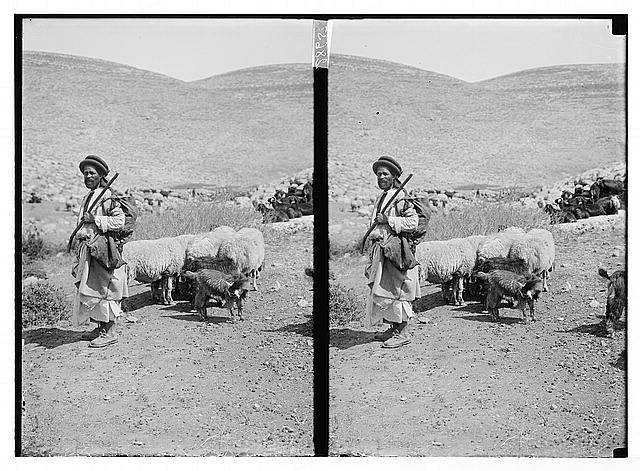 [Goatherd with herd of goats]