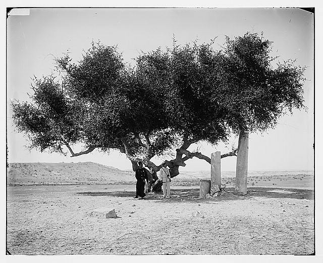 Ancient boundary line at Raffah, between Egypt and Palestine