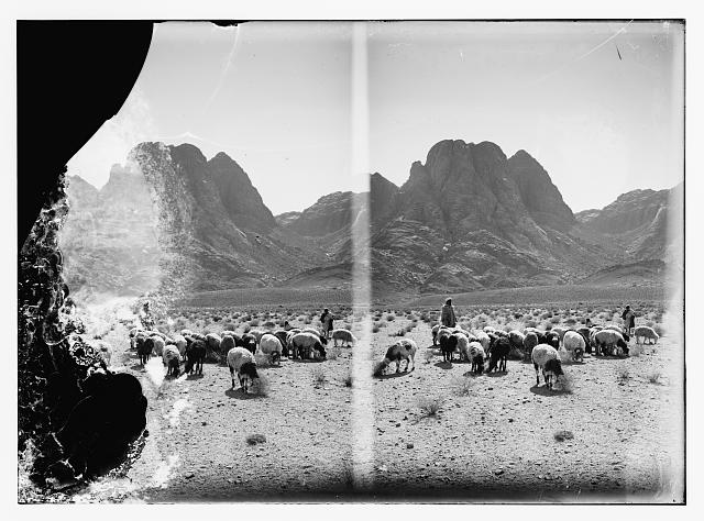 Shepherd with flocks before Mt. Horeb [Mt. Sinai]