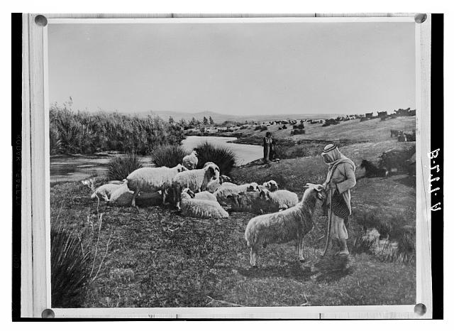 "Set of thirteen select slides of shepherd life illustrating the Twenty-Third Psalm. ""He maketh me to lie down in green pastures"""