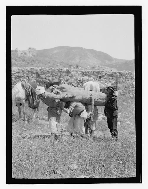 North Palestine botanical trip before 1917