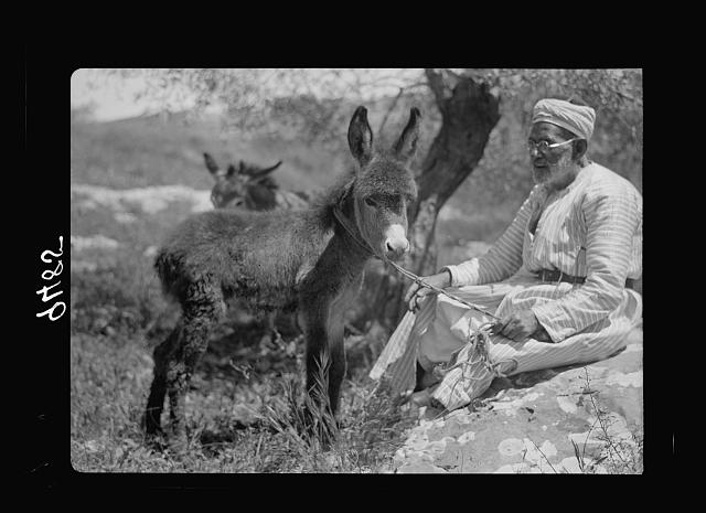 Peasant with baby donkey