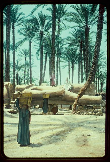 Egypt. Memphis. Colossus of Ramases II [i.e., Ramses II] in Memphis palm grove
