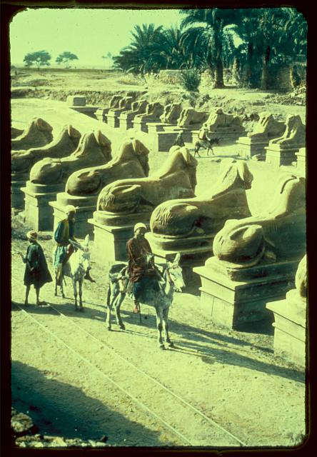 Egypt. Karnak. Row of Sphinxes in front of 1st pylon