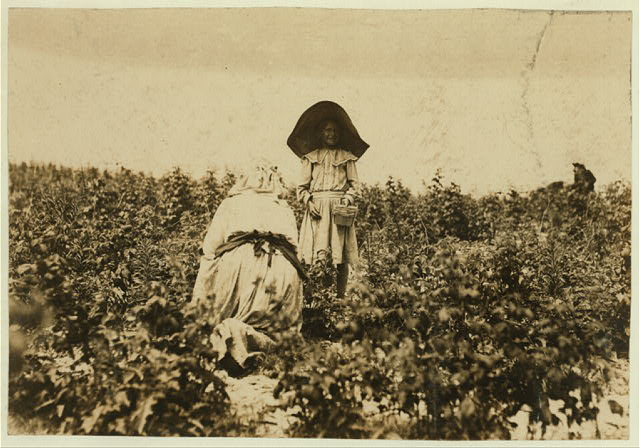 "A young berry picker on Bottomley's farm, near Baltimore, Md. She worked one winter at Youngs Island, S.C. Mother says, ""No more.""  Location: Baltimore, Maryland."