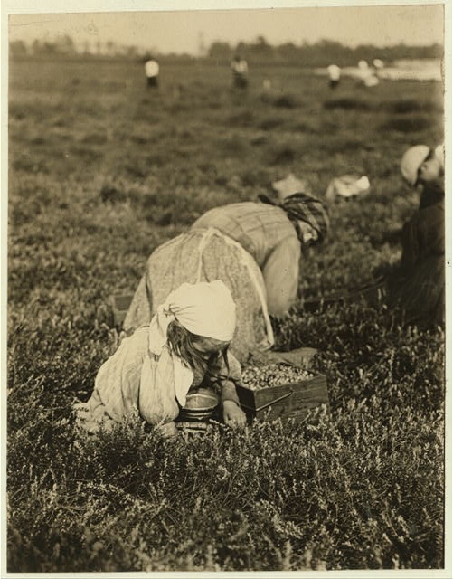 Teresa Lamelli, 818 Kate St., Philadelphia, 5 years old. Whites Bog, Browns Mills, N.J. Sept. 28, 1910. Witness E.F. Brown.  Location: Browns Mills, New Jersey