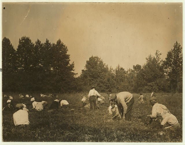 General view of Forsythe's Bog, Turkeytown, near Pemberton, N.J. with Padrone. Sept. 29, 1910. Witness, E.F. Brown.  Location: Pemberton, New Jersey