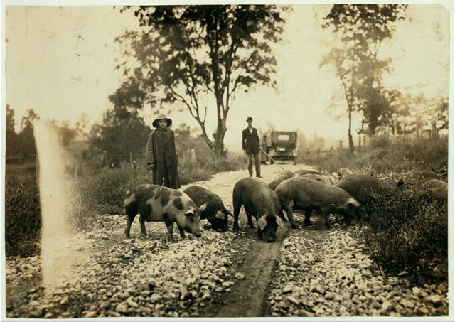 """""""Driving boy"""" taking pigs to market. Says he is 14 years old and has been working with pigs for 9 years. Goes to school in Paris, Ky. Horace Harpe, 320 West 8 Street.  Location: Winchester [vicinity], Kentucky"""