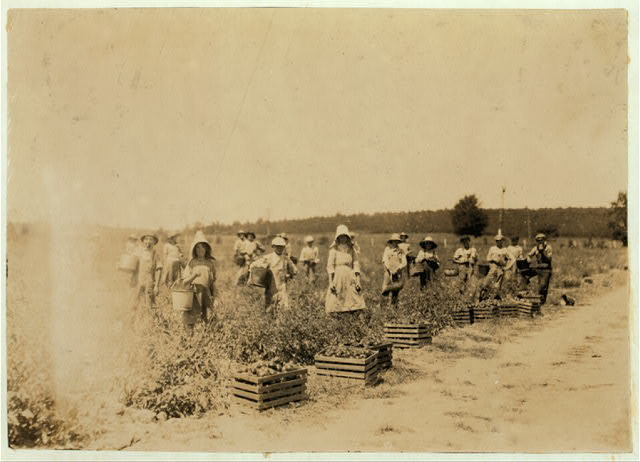 "General view of part of the force picking tomatoes on farm of W.T. Hill. There were about 25 children--most of them 8 to 15 years old. ""When school opens next month you bet we have to quit workin'"" they said. Usually earn 50 cents to $1.50 a day.  Location: Cabool, Missouri"