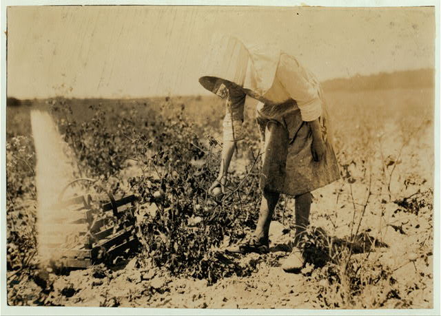 11-year old girl picking tomatoes on farm of W.T. Hill.  Location: Cabool, Missouri