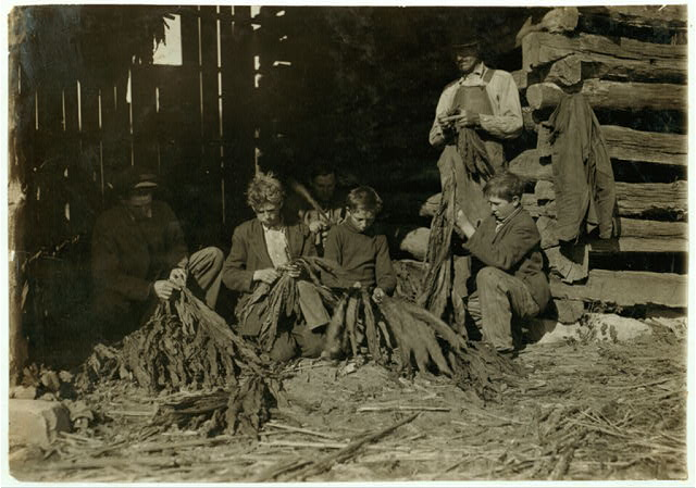 [Family of J.H. Burch, Route 1, Rockfield, Ky. Boys 12, 14 and 17 (stripping tobacco) working during school hours. Have been out a good deal. Go to Quarry School (6-12). Two families represented in photo. See special card and Kentucky report.  Location: [Warren County--Rockfield, Kentucky]